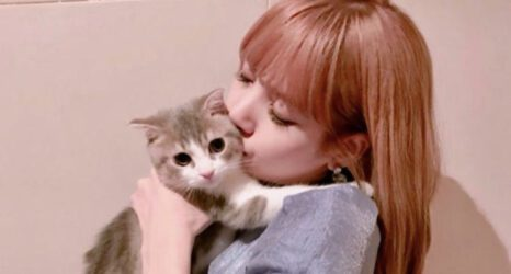 blackpink-lisa-kedi-cat-cover
